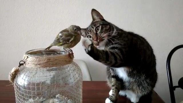 image chat-toucher-oiseau-sans-faire-mal