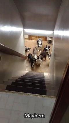 image chiens-attendre-appel-monter-escaliers