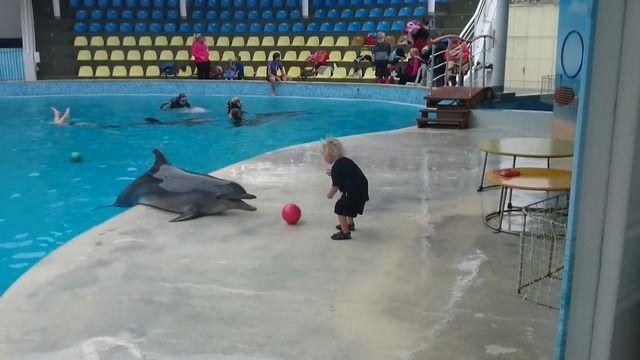 image dauphin-joue-ballon-enfant