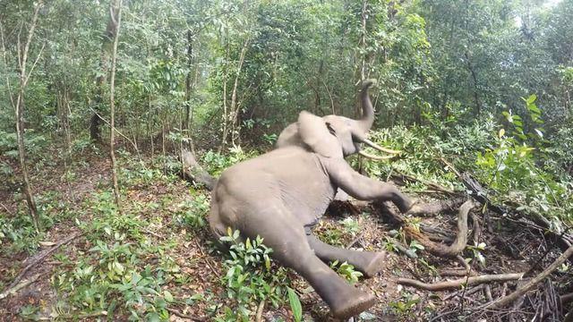image elephant-reveil-fache-tranquillisant