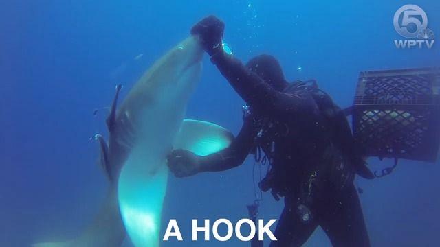 image requin-demande-aide-plongeur-retirer-crochet