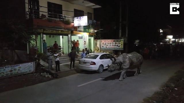 image rhinoceros-promene-rue-nepal