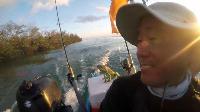 image sauvetage-iguane-perdu-mer