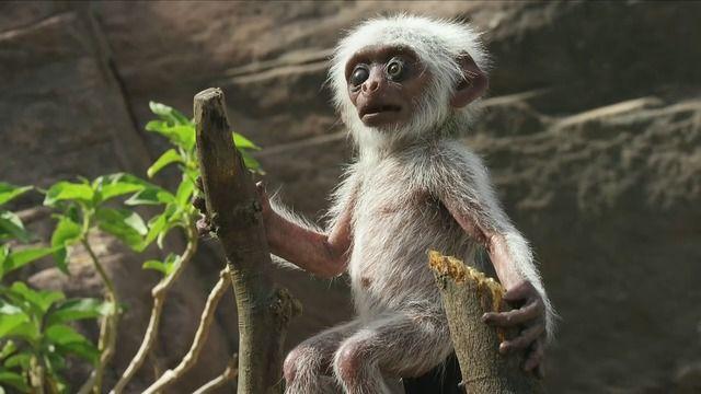 image singes-langur-funerailles-faux-singe-robot