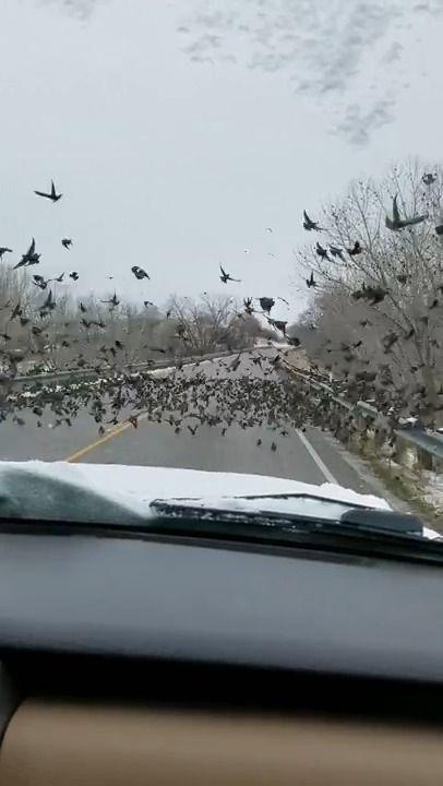 image voiture-ecrase-oiseaux-route