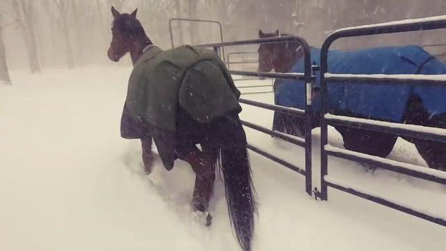 image chevaux-regretter-sortie-neige