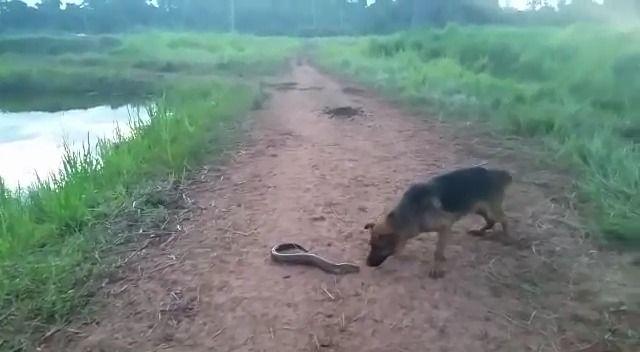 image chien-mordre-anguille-electrique-regretter