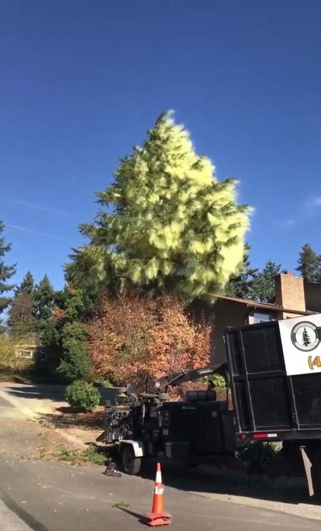 image arbre-abattu-libere-nuage-pollen
