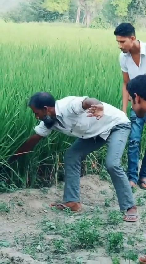 image attraper-serpent-hautes-herbes