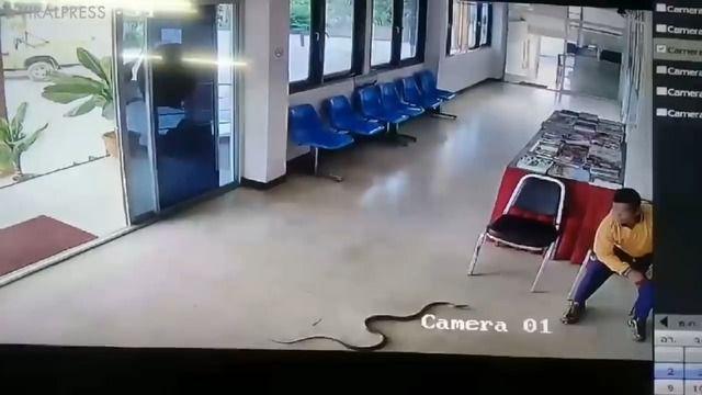 image serpent-attaque-homme-commissariat