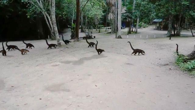 image video-lemuriens-envers-jurassic-park