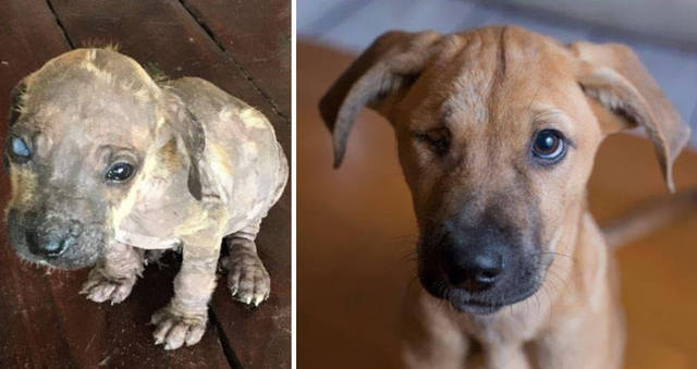 adoptions-chiens-heureux-08