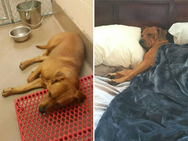 adoptions-chiens-heureux-10