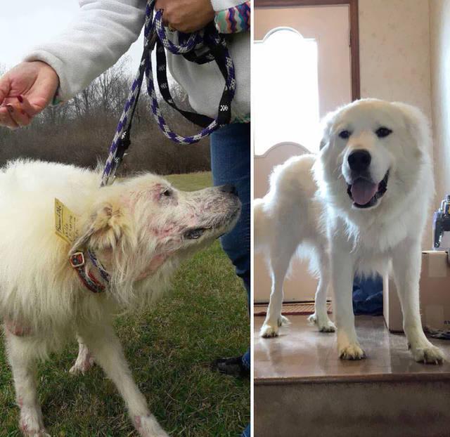 adoptions-chiens-heureux-15