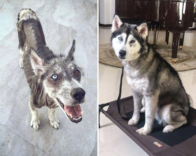 adoptions-chiens-heureux-28