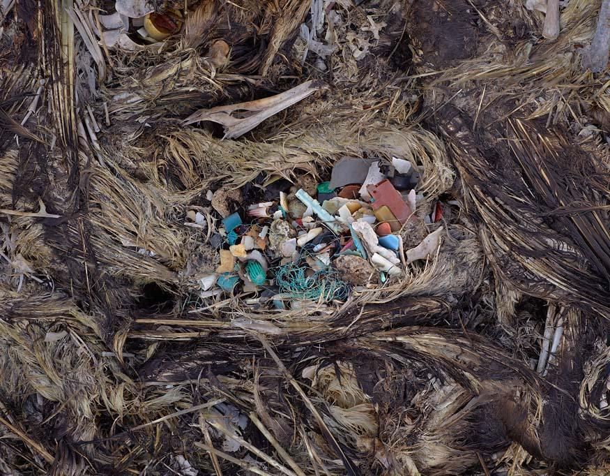 albatros-morts-04