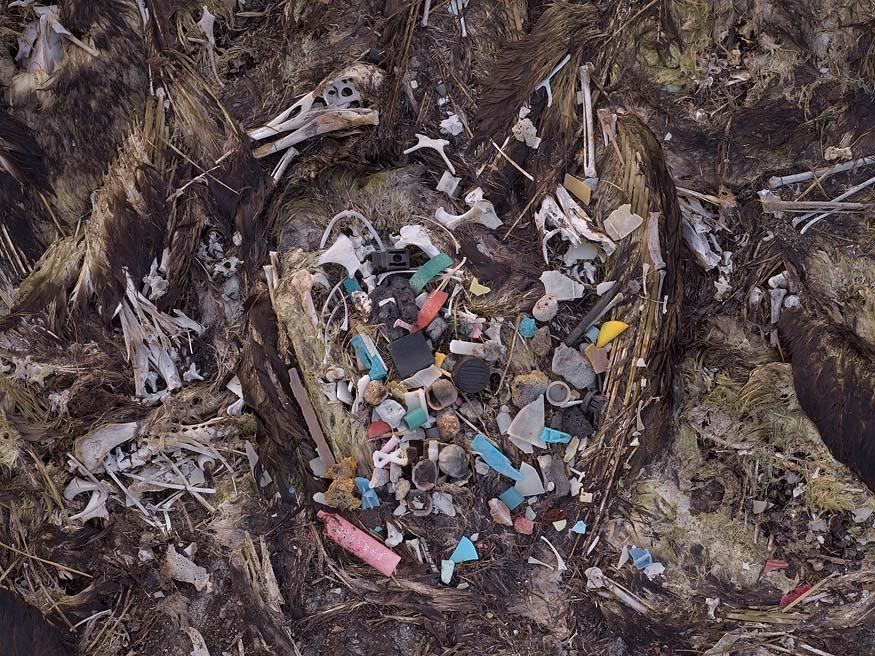 albatros-morts-05