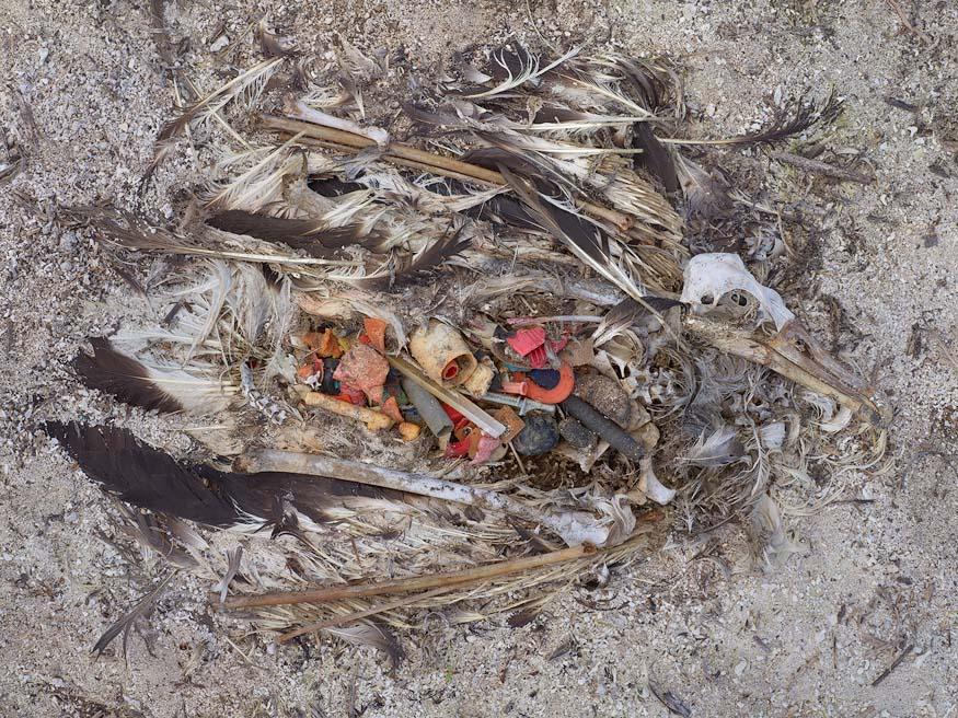 albatros-morts-12