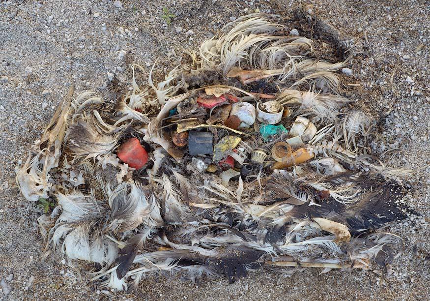 albatros-morts-15