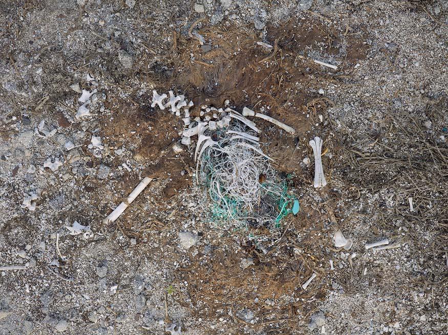 albatros-morts-16