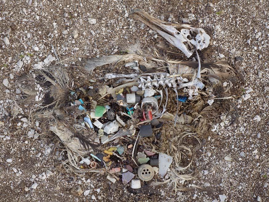 albatros-morts-18