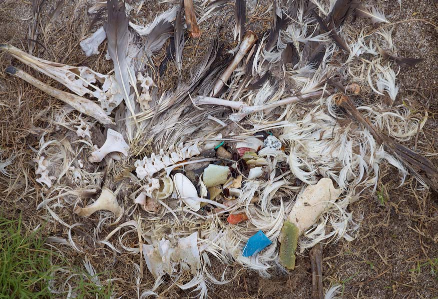 albatros-morts-22