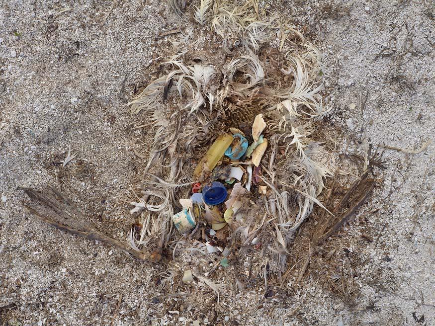 albatros-morts-26