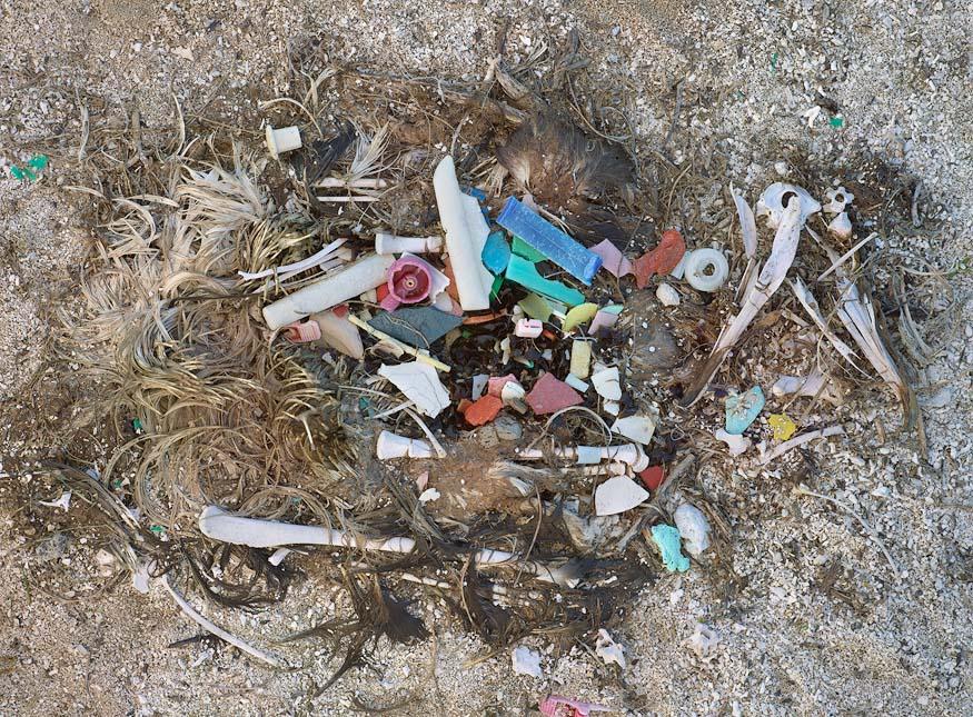 albatros-morts-27