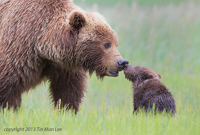 animaux-sauvages-parents-04