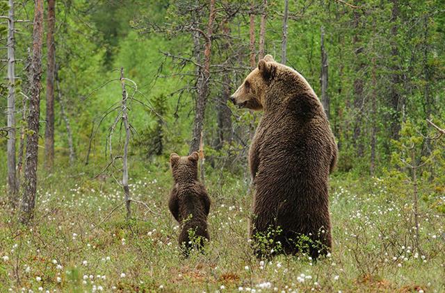 animaux-sauvages-parents-12