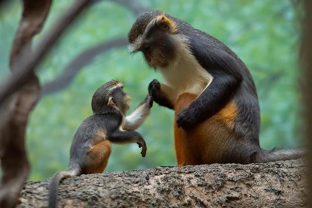 animaux-sauvages-parents-13