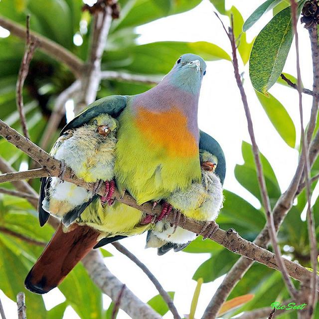 animaux-sauvages-parents-14