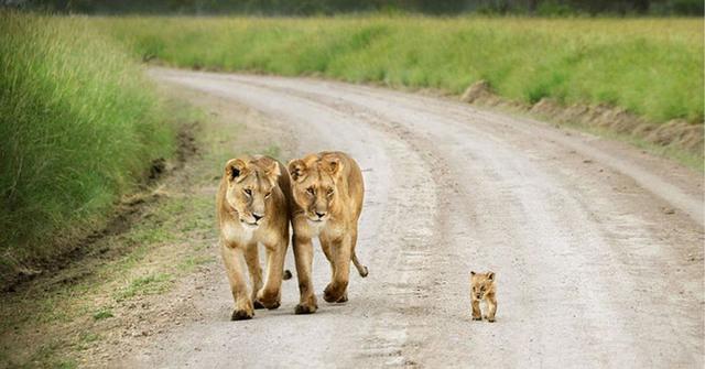 animaux-sauvages-parents-15