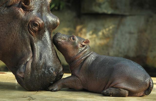 animaux-sauvages-parents-16