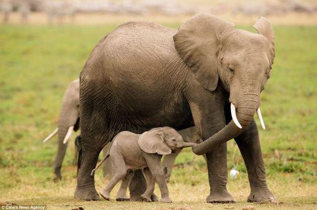 animaux-sauvages-parents-30