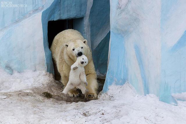 animaux-sauvages-parents-37