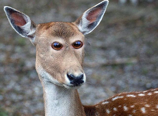 animaux-yeux-devant-10