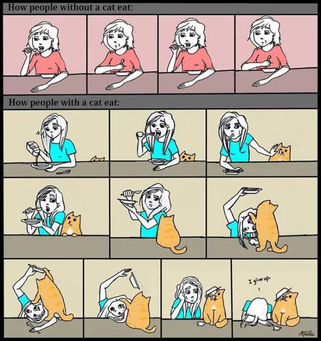 chats-chiants-19