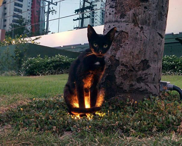 chats-diaboliques-04