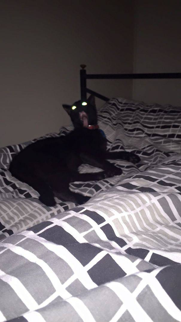 chats-diaboliques-07