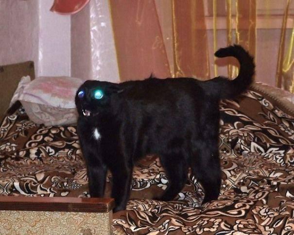 chats-diaboliques-08