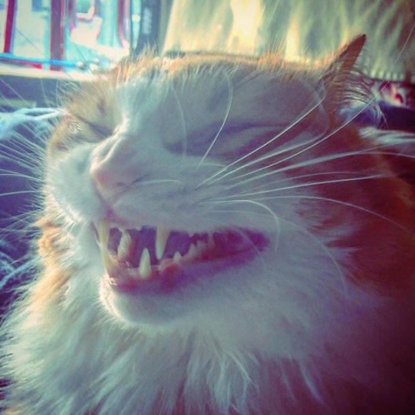 chats-diaboliques-12
