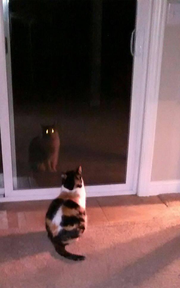 chats-diaboliques-13
