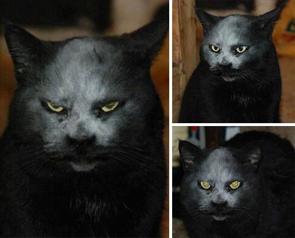chats-diaboliques-22