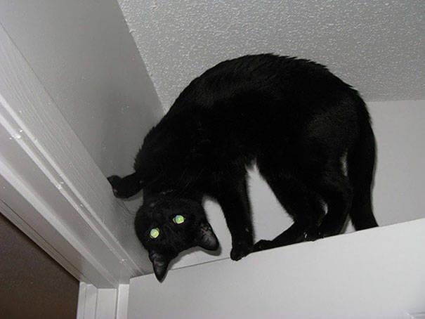 chats-diaboliques-23