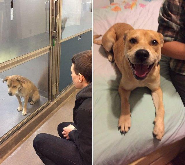 chiens-avant-apres-adoption-01