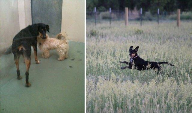 chiens-avant-apres-adoption-03