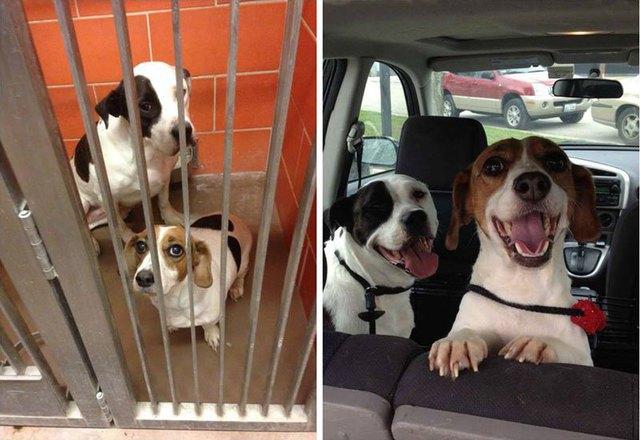 chiens-avant-apres-adoption-10