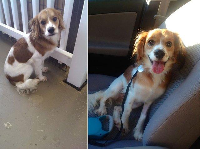 chiens-avant-apres-adoption-15