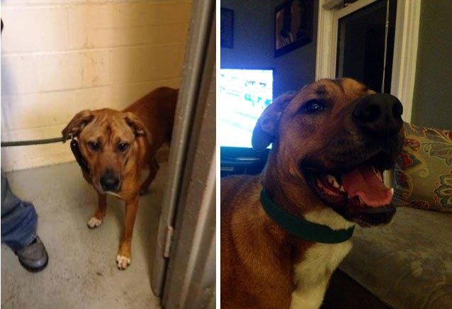 chiens-avant-apres-adoption-16